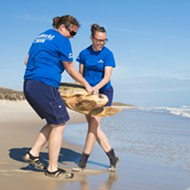 SeaWorld Orlando returns four rehabilitated sea turtles to the wild