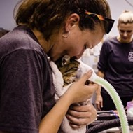 Fire at Pet Alliance of Greater Orlando reveals that this is a cat-loving town