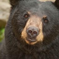 Video shows black bear roaming near Orlando's Mall at Millenia
