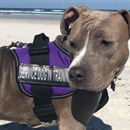 Service dog in training goes missing at Orlando International Airport