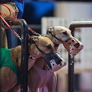 Greyhound industry sues Seminole County over dog injury reports