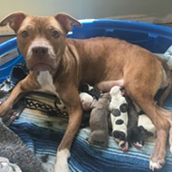 Lake County Animal Shelter is at critical capacity and desperately needs adopters