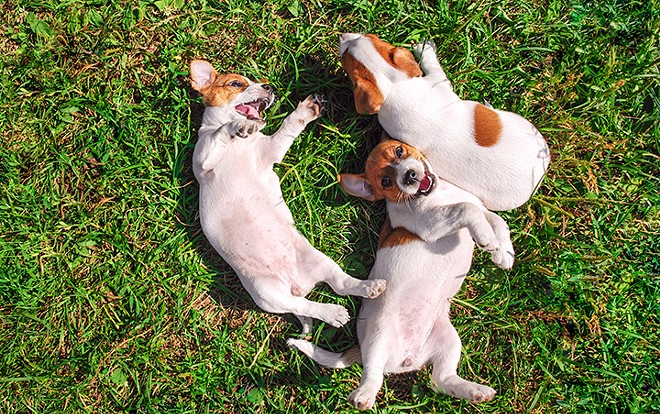 gal_paws_in_the_park_shutterstock_342785012.jpg