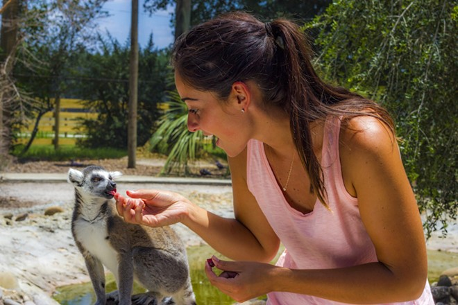 Feeding a lemur at Safari Wilderness