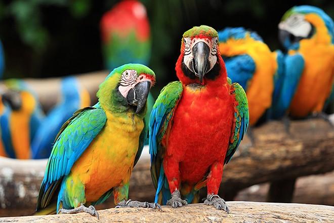 gal_exotic_birds_adobestock_46957449.jpeg.jpg