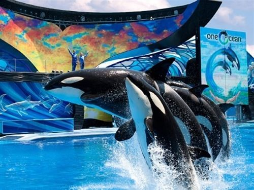 PHOTO VIA SEAWORLDTHEMEPARKS.COM