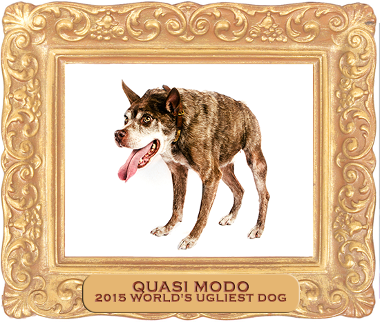 PHOTO VIA WORLD'S UGLIEST DOG