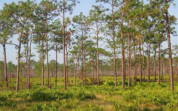 The Disney Wilderness Preserve - PHOTO VIA NATURE.ORG