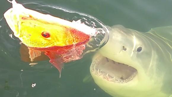 PHOTO VIA JACKSONVILLE FISHING CHARTERS FACEBOOK