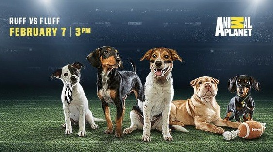 PHOTO VIA PUPPY BOWL FACEBOOK