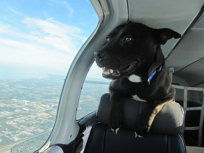 puppy-love-puppies-and-pilots3.jpg