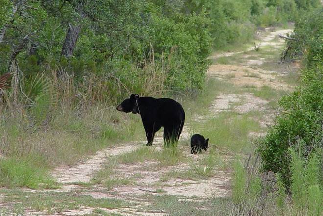 PHOTO BY FLORIDA FISH AND WILDLIFE VIA FLICKR