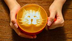 IMAGE VIA ORLANDO CAT CAFE