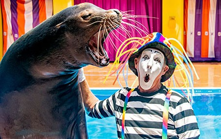 One of SeaWorld Orlando's mimes during the Sea Lions Tonight show - IMAGE VIA SEAWORLD ORLANDO