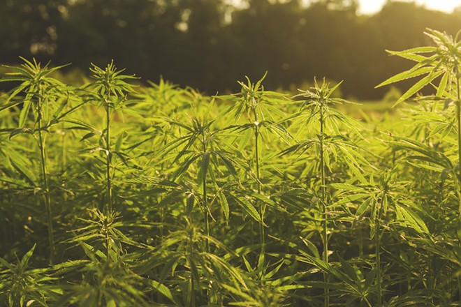 INDUSTRIAL HEMP FARMING