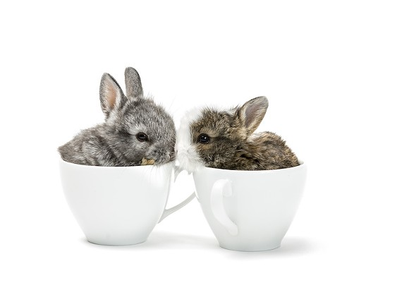 bunny_cafe_adobestock_197489718.jpeg