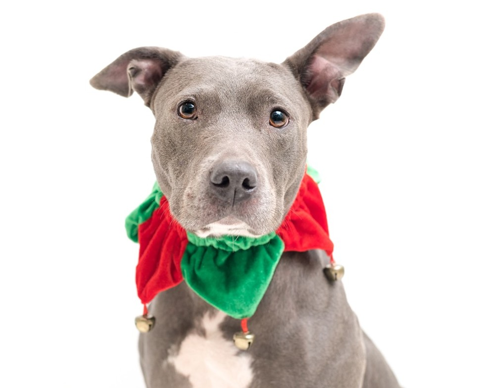 Jewels (A444121) - PHOTO BY PAWSITIVE SHELTER PHOTOGRAPHY