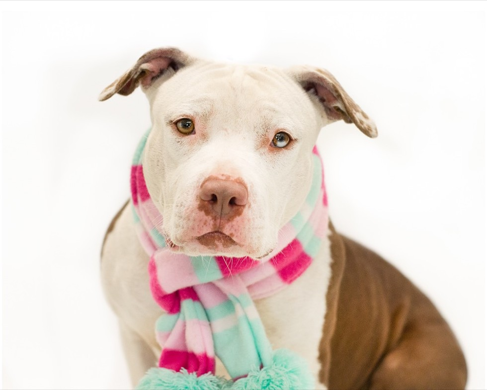 Dotty (A443948) - PHOTO BY PAWSITIVE SHELTER PHOTOGRAPHY