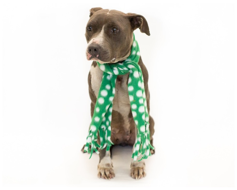 Diamond (A444136) - PHOTO BY PAWSITIVE SHELTER PHOTOGRAPHY