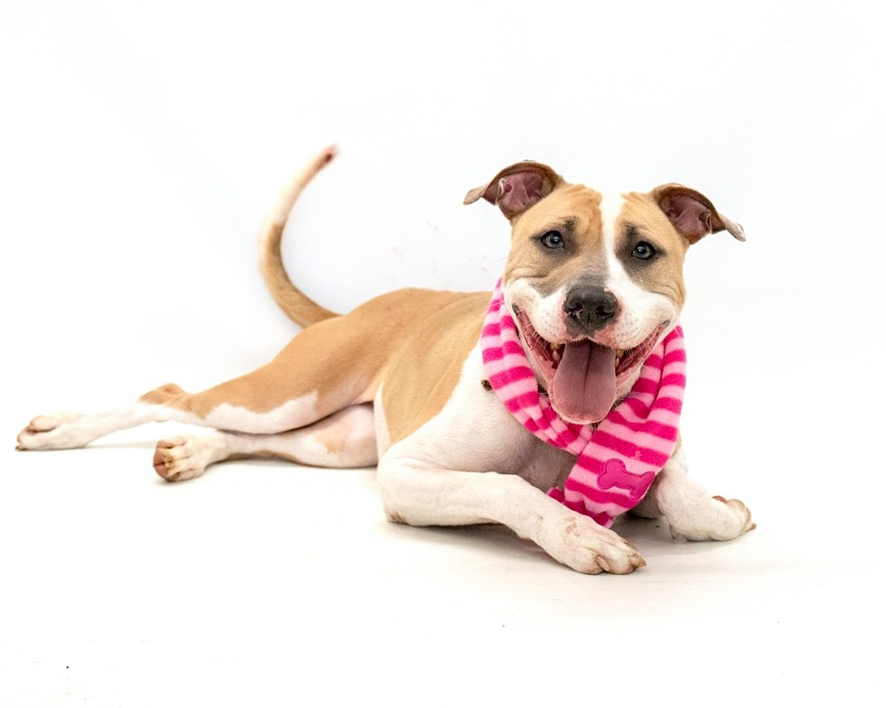 Joanie (A443371) - PHOTO BY PAWSITIVE SHELTER PHOTOGRAPHY