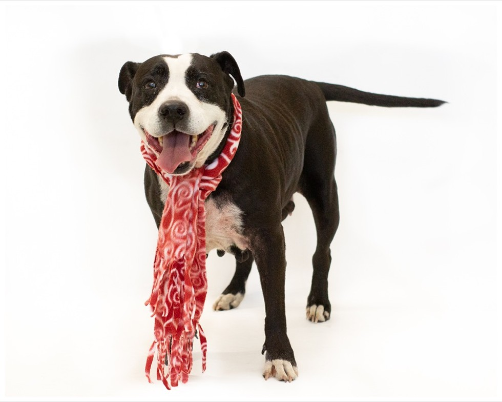 Lola (A443985) - PHOTO BY PAWSITIVE SHELTER PHOTOGRAPHY