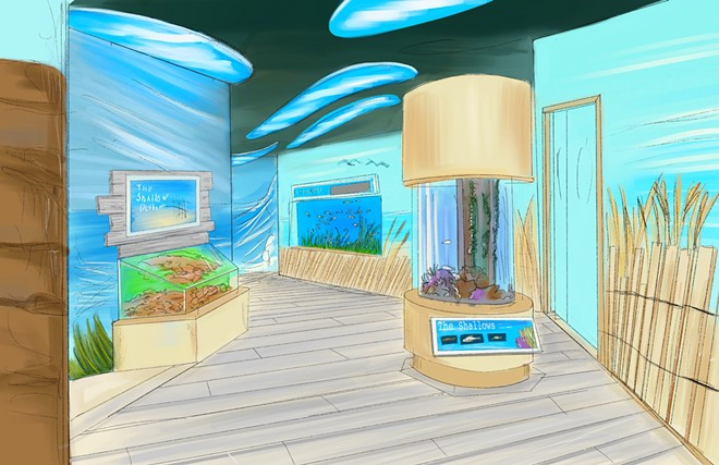 Renderings of the updated Shorelines exhibit - IMAGE VIA FLORIDA AQUARIUM
