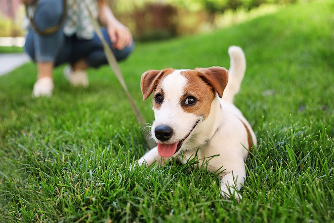 paws_in_the_park_adobestock_281903517.jpeg