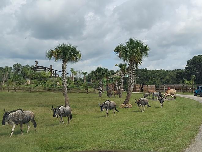 Wild Florida's Safari Park - IMAGE VIA KEN STOREY