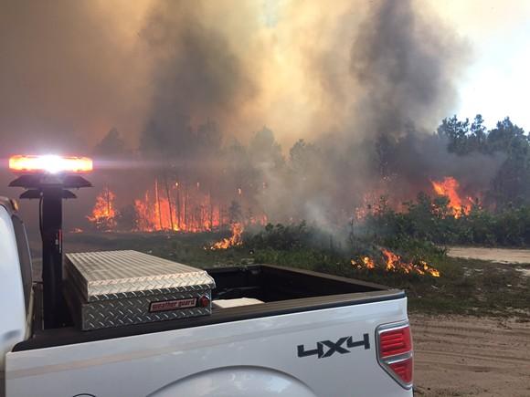 PHOTO VIA FLORIDA FOREST SERVICE