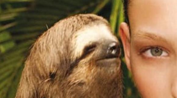 rape_sloth.jpg