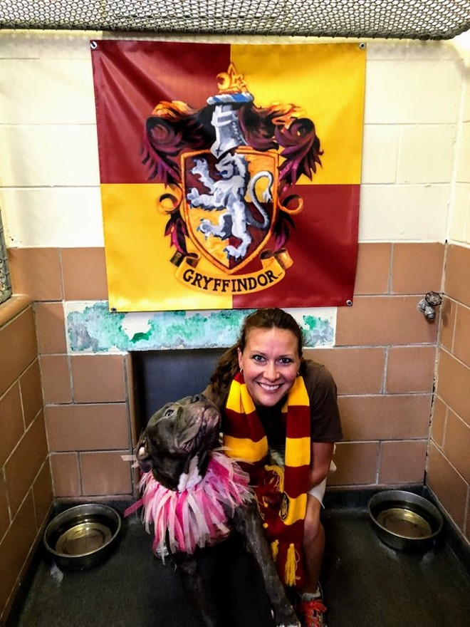 A VERY GOOD GRYFFINDOR AT THE ORLANDO PET ALLIANCE.
