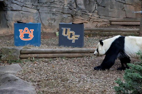 Big dumb panda picks auburn to beat ucf in chick fil a for Mercedes benz stadium box office hours