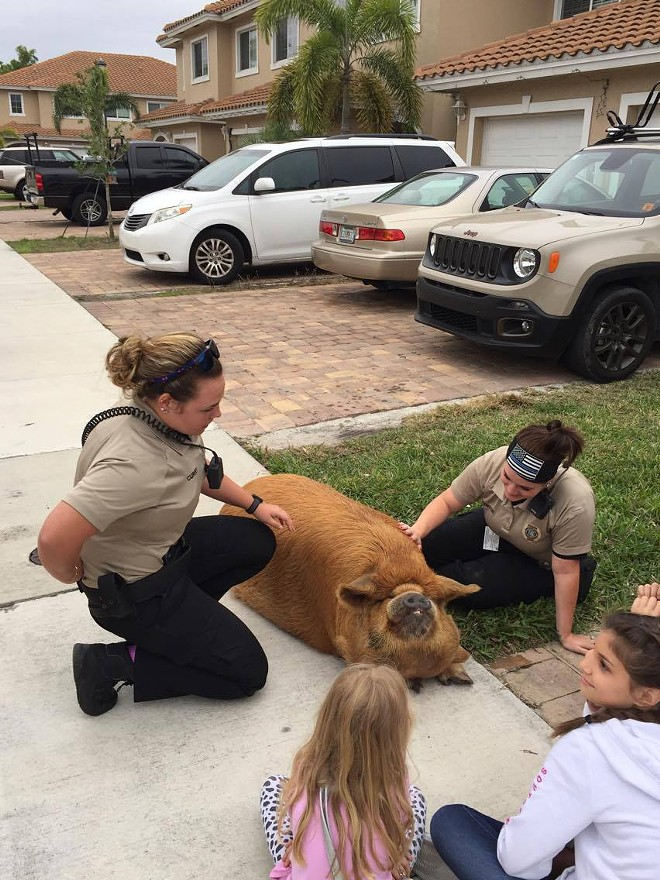 PHOTO VIA COLLIER COUNTY SHERIFF'S OFFICE/FACEBOOK