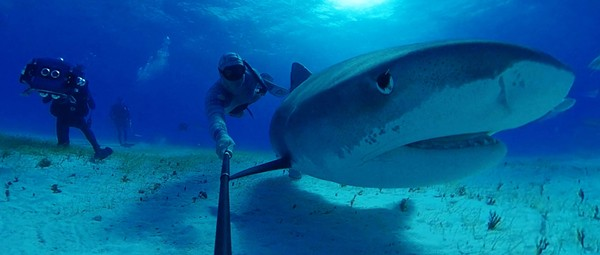 Virtual reality experiences bring aquarium audiences closer to nature, without captivity