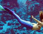 Weeki Wachee Mermaids visiting Sea Life Aquarium this week