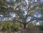 Orange County's Split Oak Forest could be saved by the coronavirus pandemic