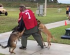 Navy SEALs launch investigation after Florida video shows a dog attacking a man in a Kaepernick jersey