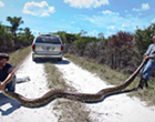 The FWC launches new kill a snake, get a T-shirt program