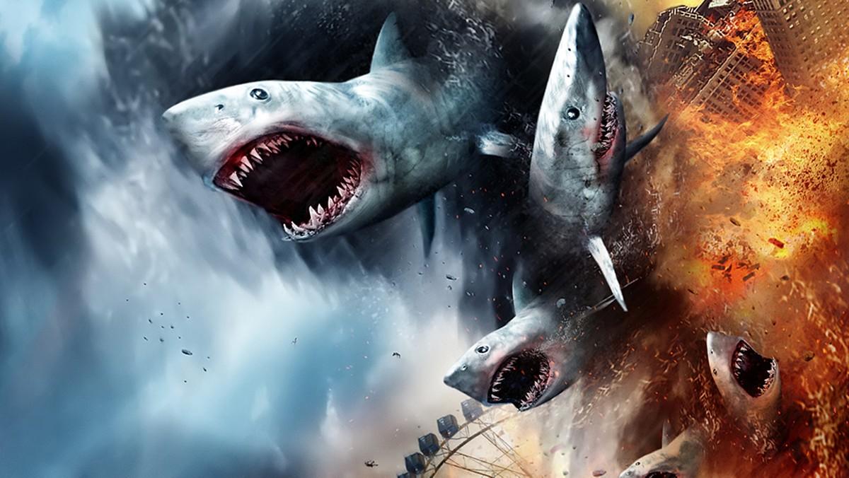 1000w_shark.jpg
