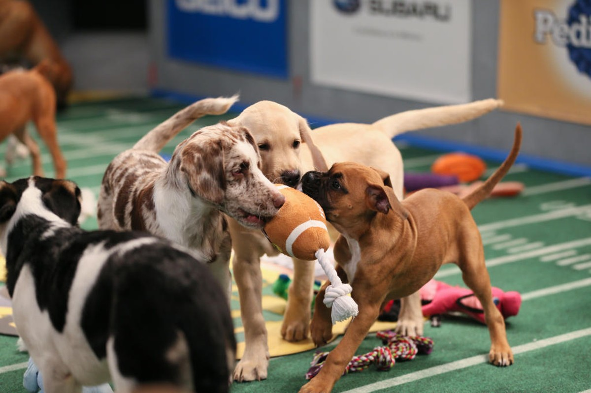 puppy-bowl-game-day-revisited.jpg