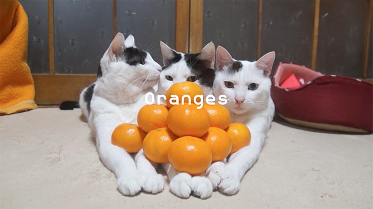 gal_fl_prize-domingo_castillo_surface_image-_prologue-_oranges_-still-01.jpg