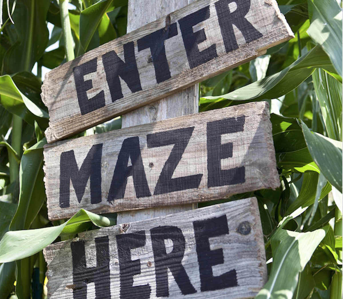 14 Central Florida pumpkin patches, corn mazes, hayrides and