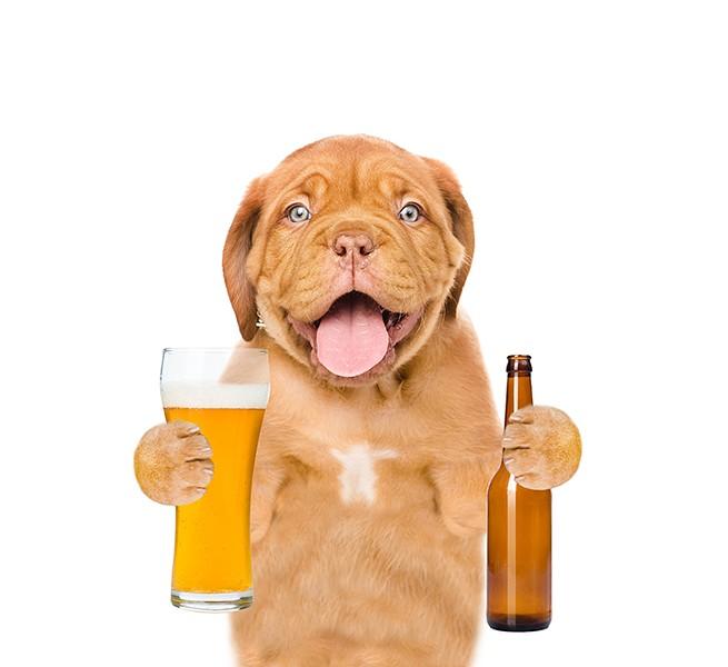gal_drink_pints_n_paws_shutterstock_620249138.jpg