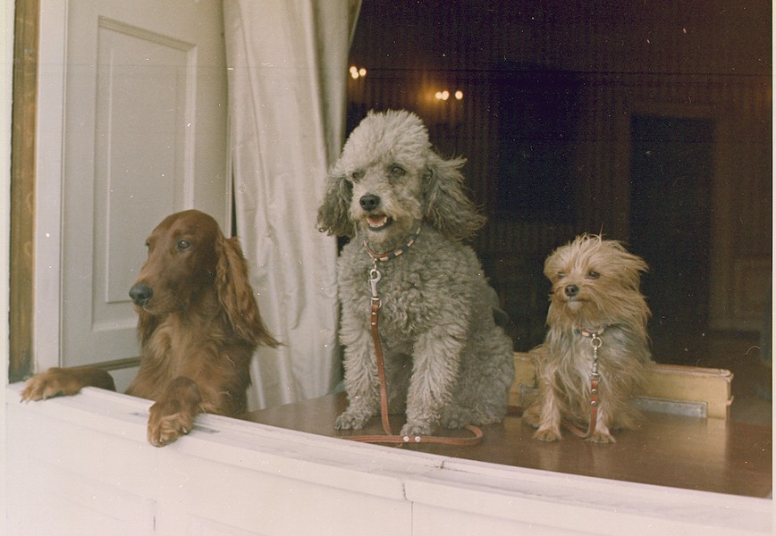 PHOTO OF RICHARD M. NIXON'S DOGS LOOKING OUT A WHITE HOUSE WINDOW VIA GENERAL SERVICES ADMINISTRATION/WIKIMEDIA COMMONS