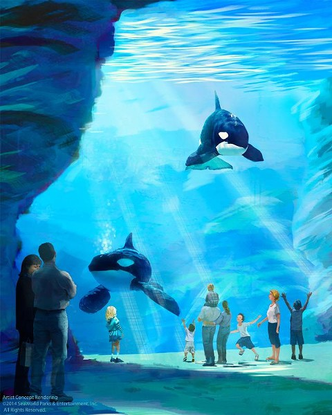 An artist's rendering of the proposed Blue World orca habitat - IMAGE VIA SEAWORLD