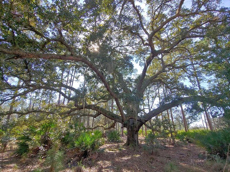 Split Oak Forest - PHOTO BY DAVE PLOTKIN