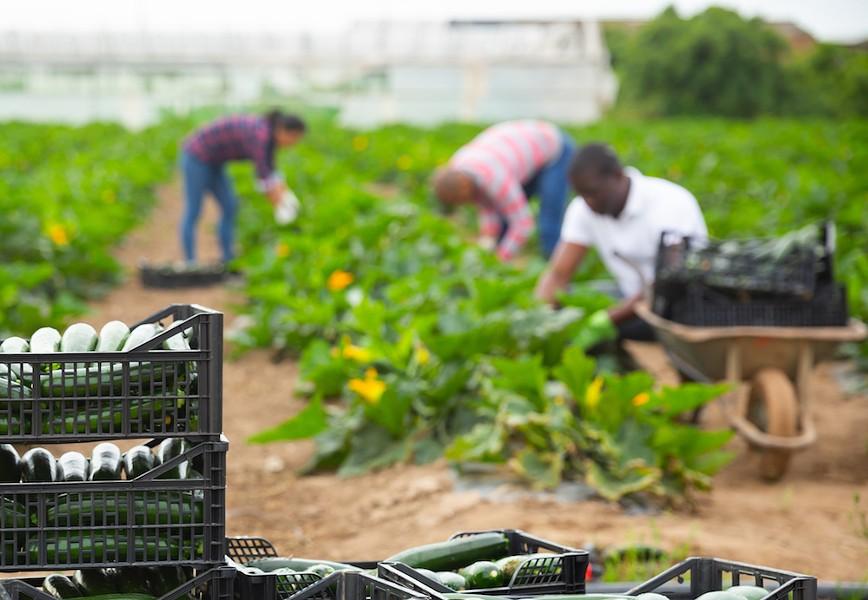 Florida farmworkers - PHOTO VIA ADOBE STOCK