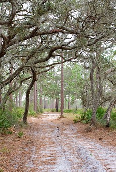 Environmental activists rally to save the Split Oak Forest from an expanding toll road