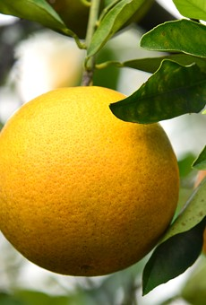 Florida's citrus crop is projected to be lowest since World War II