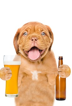 Sanford's Pints N' Paws craft beer festival brings together the two best things in life